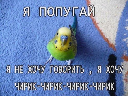 1347955810_kartinki-dlya-nastroeniya-42