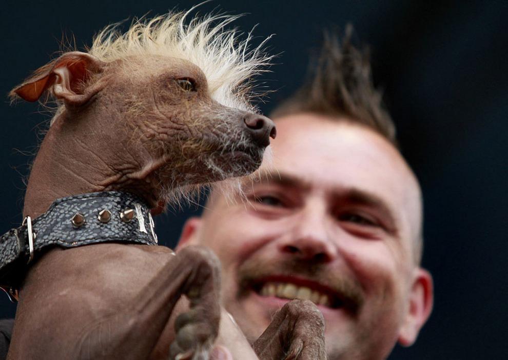 Пес по кличке Айки со своим хозяином на ежегодном конкурсе «Самая уродливая собака в мире 2012» в городе Петалума, штат Калифорния, США.