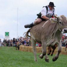 Боварские Бро устроили чемпионат по скачкам на быках