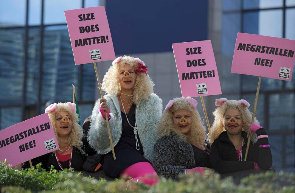 Демонстрантки в образе свиней протестуют у штаб-квартиры Европейского Союза в Брюсселе, Бельгия, требуя провести радикальную реформу сельского хозяйства.