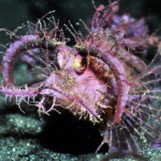 ТОР-10 — Самые удивительные рыбы мирового океана