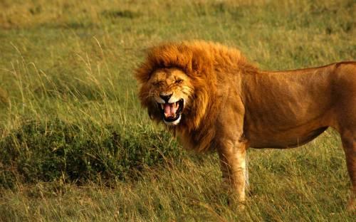 lion0678965762
