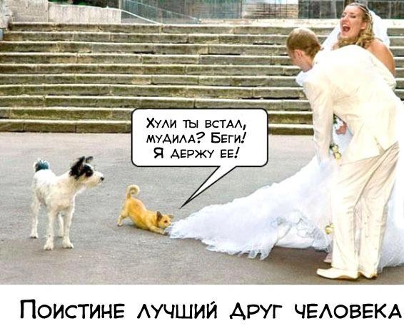 smeshnie komiksii 0152916459