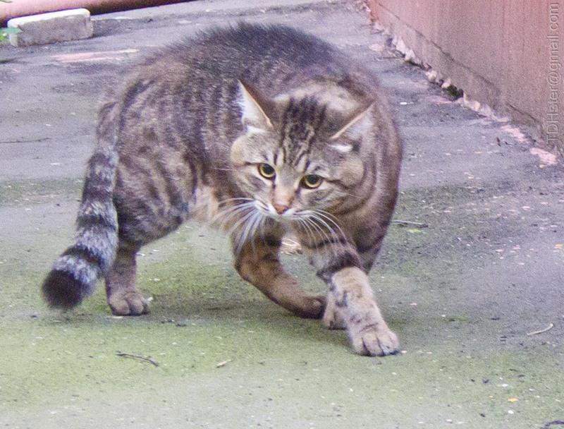 dangerous cat1084519733