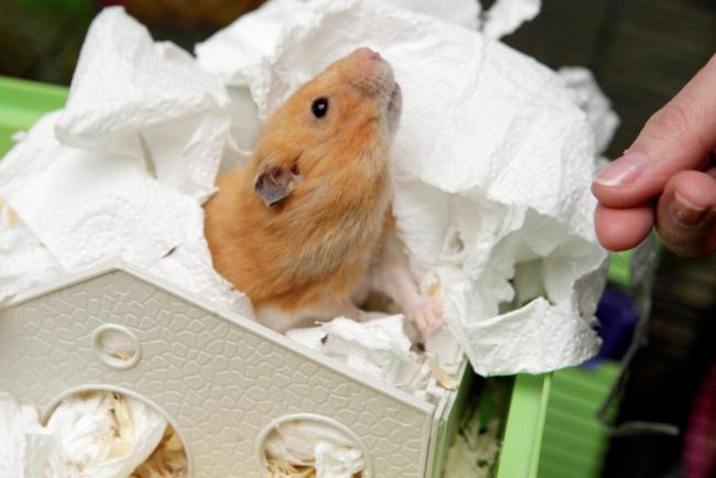 hamster-jesus1365946505