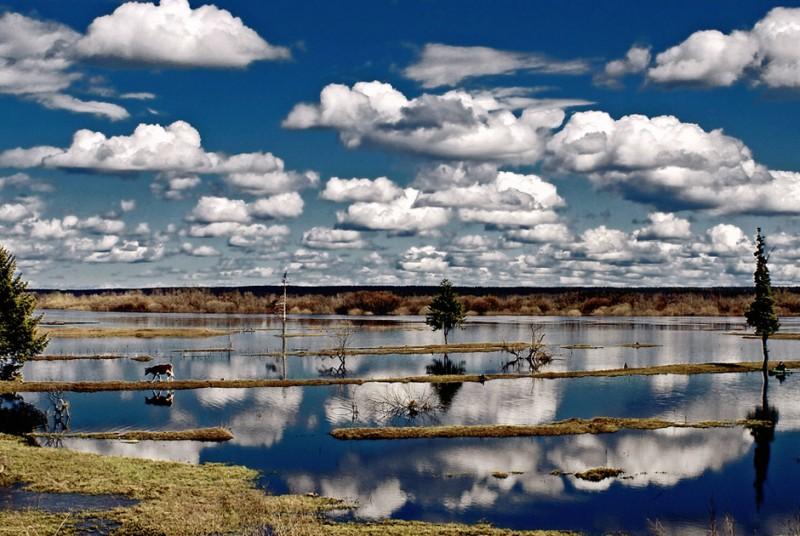 Традиционная фотоподборка #32 BroDude.ru prikolnie foto 0709430853