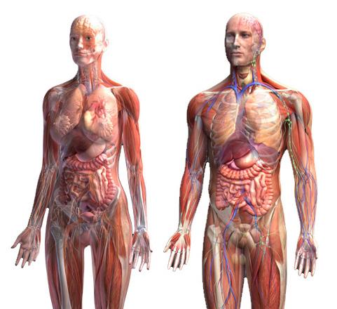 Тело человека — невероятно