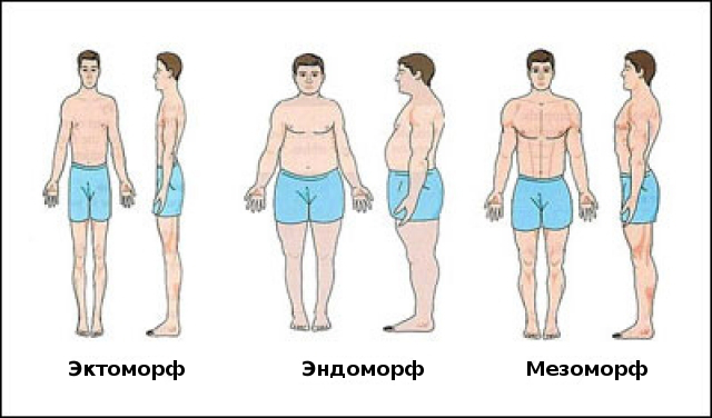 types of somatotypes How can the answer be improved.