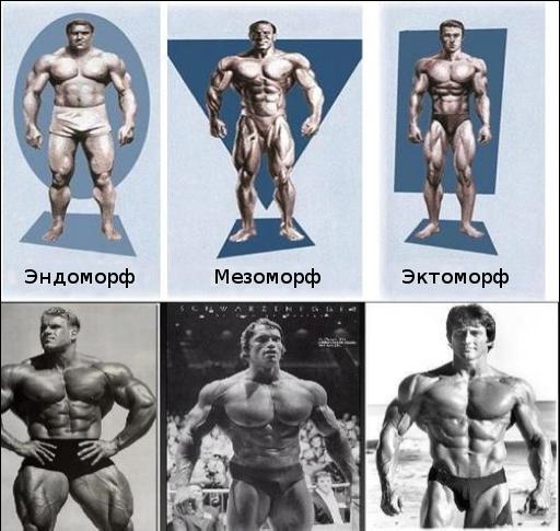 Фитнес советы для чуваков разных комплекций BroDude.ru brodude.ru, 2.07.2013, ybgaWKShIAB8UnD8bUuYPXsikPP38jDq