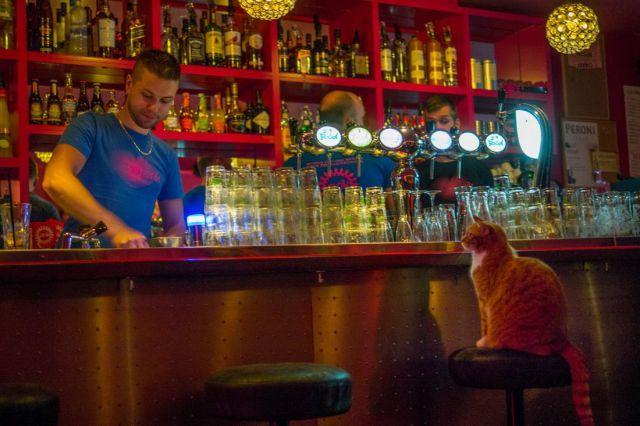 котик в баре