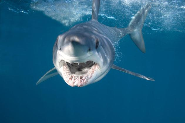 Что будет если акула укусит