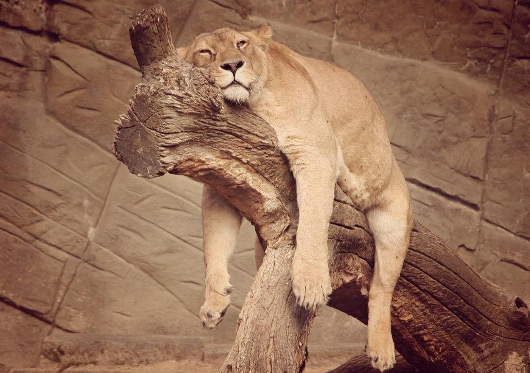 Быть лентяем и не разжиреть