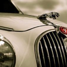 Jaguar, обогнавший ягуара