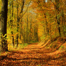 Лечь на курс #30 — Дьяковский лес