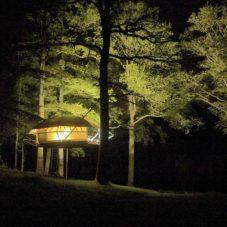 Квартира-гамак на дереве