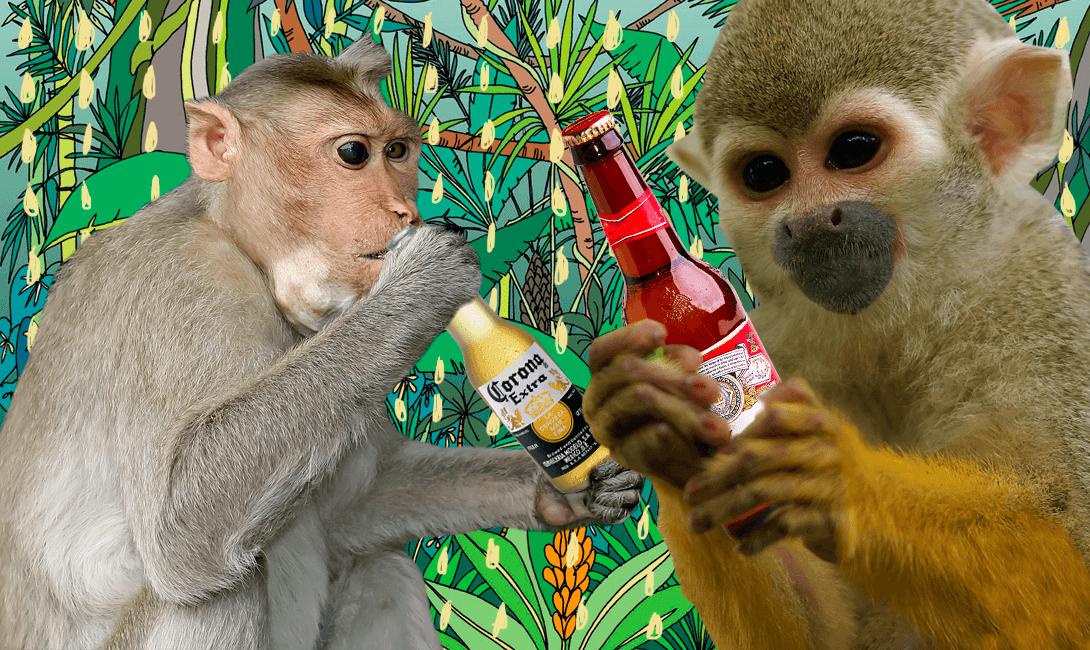 Секс обезьяна и девушка 27 фотография