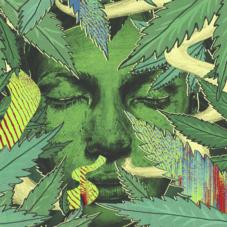 Почему в нашей стране никогда не будет легализованной марихуаны